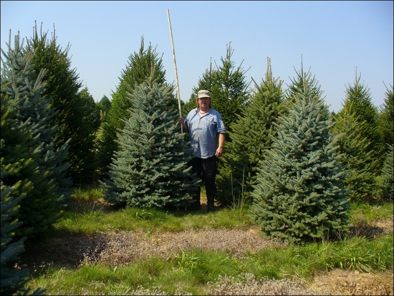 New Frontier Landscape > Trees Dug, Trees Delivered, Trees Planted ... New Frontier Landscape > Trees Dug, Trees Delivered, Trees Planted ... Blue Things 5' colorado blue spruce
